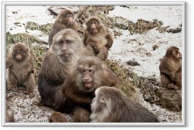 monkeys Framed Poster