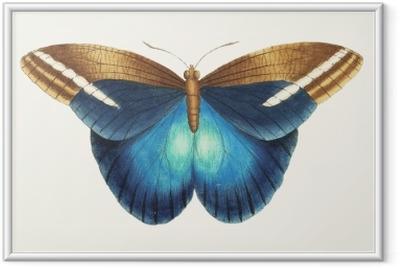 Poster en cadre Illustration d'œuvres d'animaux