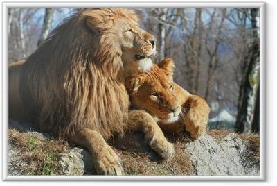 Ingelijste Poster Leeuw en leeuwin
