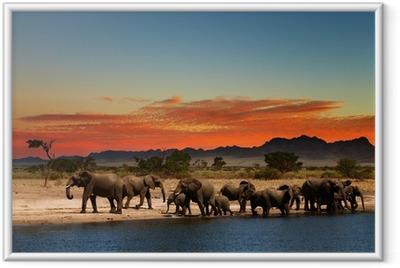 Gerahmtes Poster Elefantenherde in der afrikanischen Savanne