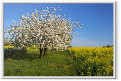 Gerahmtes Poster Blühender Apfelbaum