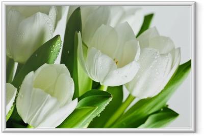 Ingelijste Poster Witte tulpen