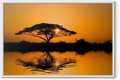 Gerahmtes Poster Acacia Tree at Sunrise