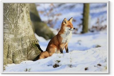 Ingelijste Poster Fuchs