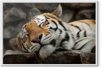 Poster en cadre Sleeping tiger - Thèmes