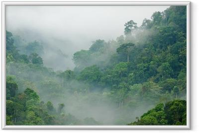 Plakat w ramie Poranna mgła w lesie tropikalnym