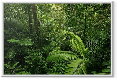 Dense Tropical Rain Forest Framed Poster