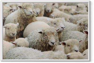 羊 Framed Poster