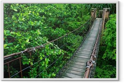 Ingelijste Poster Touw wandelpad door de boomtoppen in een regenwoud