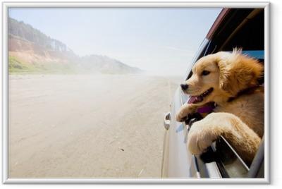 Pentu katselee auton ikkunaa Kehystetty juliste