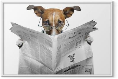 Hund læser avis Indrammet plakat