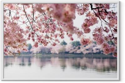 Kirsikankukkia yli vuorovesialtaan washington dc: ssä Kehystetty juliste