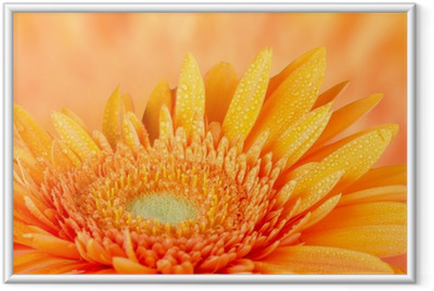 Ingelijste Poster Oranje gerbera daisy