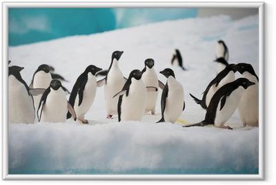 Penguins on the snow Framed Poster