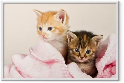 Poster i Ram Två kattungar i en rosa filt