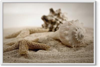 Plakat w ramie Muszle na piasku
