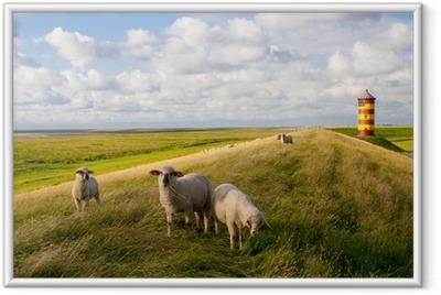 Ingelijste Poster Schapen bij Pilsumer Lighthouse - Noordzee