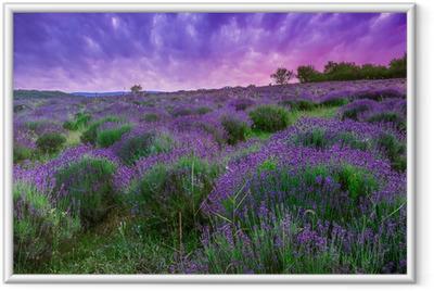 Póster com Moldura Sunset over a summer lavender field in Tihany, Hungary