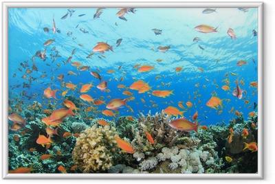 Ingelijste Poster Coral Reef Onderwater
