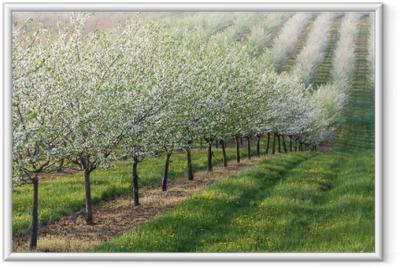 Innrammet plakat Blomstrende frukthage