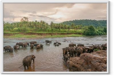 Gerahmtes Poster Swimmong Elefanten