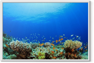 Underwater Coral Reef og Tropical Fish Indrammet plakat