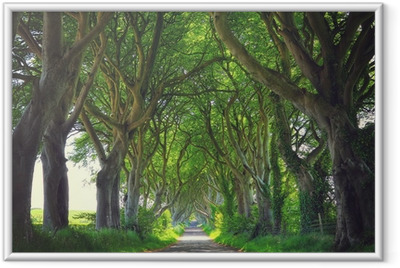 Dark Hedges trees Framed Poster