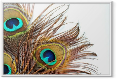 Poster en cadre Trois plumes de paon