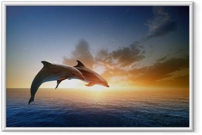 Ingelijste Poster Dolfijnen springen