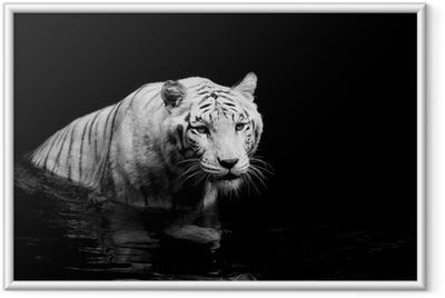 Poster en cadre White tiger