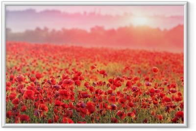 0d4ae35bb4 Ingelijste Poster Een veld vol rode klaprozen in de ochtendmist