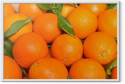 Tasty valencian oranges freshly collected Framed Poster