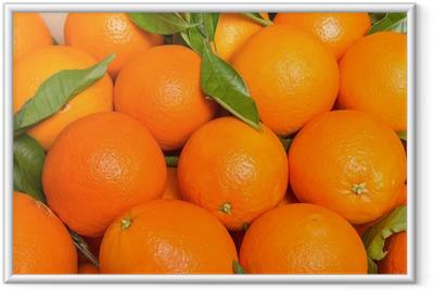 Ingelijste Poster Smakelijke valencian sinaasappels vers verzameld