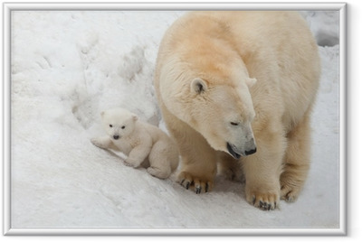 white bear Framed Poster