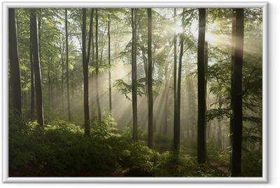 Poster en cadre Forêt de source de hêtre après quelques jours de pluie dans un matin brumeux