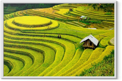Poster en cadre Rizières en terrasses au vietnam - Nature et régions sauvages