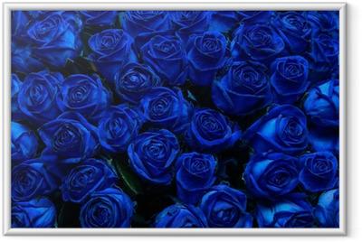 blue roses Framed Poster