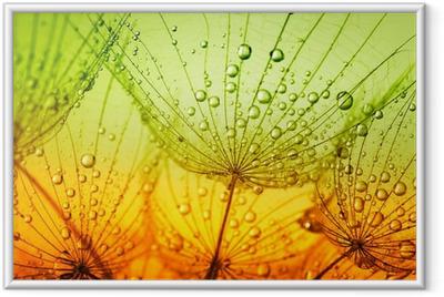 dandelion flower Framed Poster