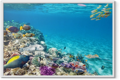 Underwater world with corals and tropical fish. Framed Poster