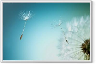 Dandelion Framed Poster
