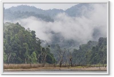 Ingelijste Poster Ochtend mist en dode bomen in dichte tropisch regenwoud, Perak, Maleisië