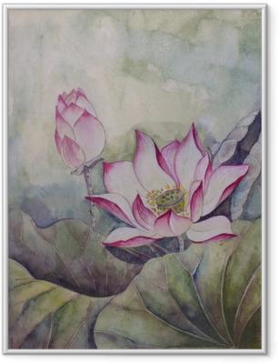 Plakat w ramie Piękny kwitnący lotos