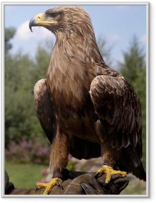 Gerahmtes Poster Profil Portrait der schönen goldenen Adler