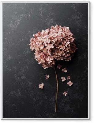 Poster en cadre Fleurs séchées hortensia sur noir vue millésime table top. Appartement style laïque. - Plantes et fleurs