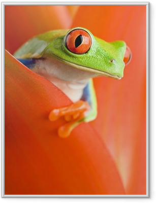 frog in a plant Framed Poster