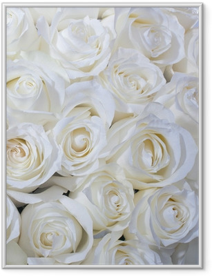 Poster en cadre Roses blanches fond - Thèmes
