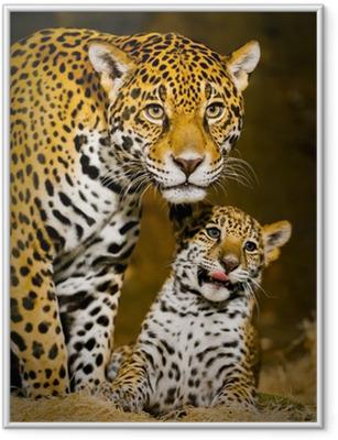 Póster Enmarcado Jaguar Cubs