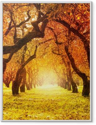 Gerahmtes Poster Herbst. Herbst. Herbstlicher Park