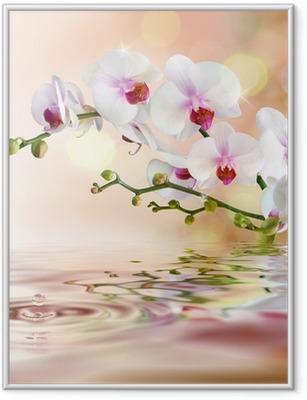 Poster en cadre Orchidées blanches sur l'eau avec la baisse