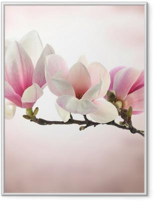 Póster com Moldura magnolia